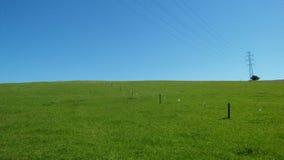 Natureza da grama verde fotos de stock royalty free