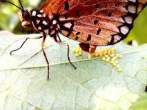 Natureza da incubação Fotos de Stock Royalty Free