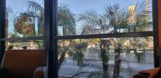 Natureza da janela dos anéis de espuma de Dunkin imagens de stock