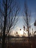 Natureza da manhã Fotos de Stock Royalty Free
