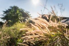 Natureza da paisagem da grama da flor Imagens de Stock Royalty Free