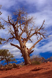 Natureza da paisagem - Sedona, o Arizona Imagem de Stock Royalty Free