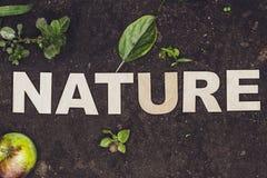 Natureza da palavra composta com as letras de madeira Imagem de Stock Royalty Free