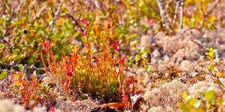 Natureza da região polar no outono Foto de Stock Royalty Free