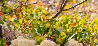 Natureza da região polar no outono Imagens de Stock