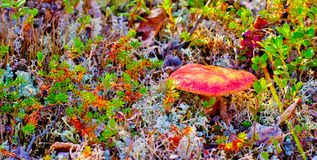Natureza da região polar no outono Imagem de Stock