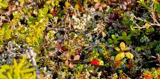 Natureza da região polar no outono Imagem de Stock Royalty Free