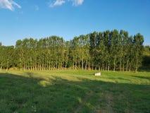 Natureza da Sérvia Imagem de Stock