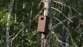 Natureza das árvores das madeiras da casa do pássaro vídeos de arquivo