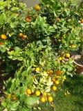 Natureza das plantas de FRUTOS fotos de stock royalty free