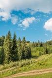 Natureza de árvores verdes e céu azul, estrada em Medeo em Almaty, Cazaquistão fotografia de stock