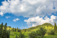 Natureza de árvores verdes e do céu azul, perto de Medeo em Almaty, Cazaquistão, Ásia Fotografia de Stock