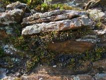 A natureza de Baikal Ardósias, cobertos de vegetação com a vegetação Imagens de Stock Royalty Free