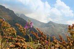 A natureza de Cazaquistão Flores selvagens em um fundo de montanhas poderosas foto de stock