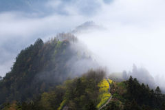 Natureza de China Shitan Fotos de Stock Royalty Free