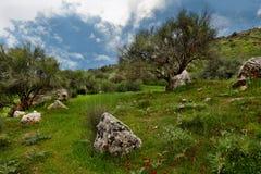 Natureza de Dezful, sul a oeste de IRÃ Imagens de Stock Royalty Free