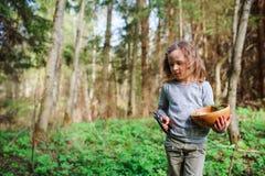 A natureza de exploração da menina da criança na floresta adiantada da mola caçoa a aprendizagem amar a natureza Crianças de ensi Imagens de Stock Royalty Free