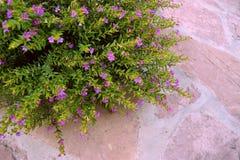 Natureza de flores roxas coloridas foto de stock royalty free