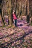 Natureza de florescência, açafrões, viajante novo Imagens de Stock