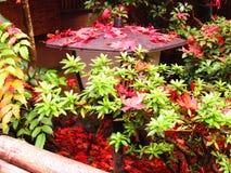Natureza de Japão Imagem de Stock Royalty Free