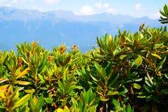 Natureza de Kavkaz Imagens de Stock Royalty Free