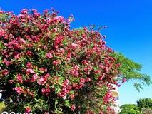 Natureza de Líbano Imagem de Stock