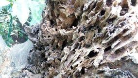 natureza de madeira oxidada bonita Fotografia de Stock Royalty Free