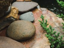 Natureza de pedra do musgo da água da decoração do jardim Fotos de Stock