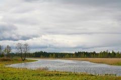 A natureza de Rússia do norte ajardine com floresta, rio, zona sujeita a inundações do rio e o prado riverine Árvore solitário Fotos de Stock Royalty Free