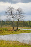 A natureza de Rússia do norte ajardine com floresta, rio, zona sujeita a inundações do rio e o prado riverine Árvore solitário Fotografia de Stock Royalty Free