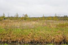 A natureza de Rússia do norte prado do deserto da paisagem, understory e campo ao lado do pântano Fotos de Stock Royalty Free