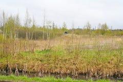 A natureza de Rússia do norte prado do deserto da paisagem, understory e campo ao lado do pântano Fotografia de Stock