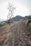 Natureza de Shenxianju do chinês Foto de Stock Royalty Free