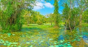 Natureza de Sri Lanka fotografia de stock royalty free