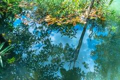 Natureza de surpresa de Tha Pom Klong Song Nam em Krabi Tha Pom Swamp Forest é uma floresta com muitos nascentes de água bonitos imagens de stock royalty free
