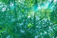 Natureza de surpresa de Tha Pom Klong Song Nam em Krabi Tha Pom Swamp Forest é uma floresta com muitos nascentes de água bonitos foto de stock