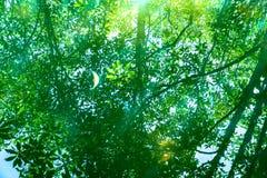 Natureza de surpresa de Tha Pom Klong Song Nam em Krabi Tha Pom Swamp Forest é uma floresta com muitos nascentes de água bonitos fotos de stock royalty free