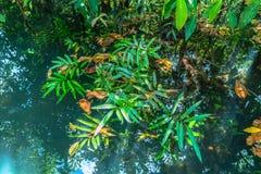 Natureza de surpresa de Tha Pom Klong Song Nam em Krabi Tha Pom Swamp Forest é uma floresta com muitos nascentes de água bonitos imagem de stock royalty free