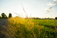 Natureza de Tailândia foto de stock royalty free