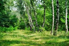 Natureza de Ucrânia Myrhorod Imagem de Stock