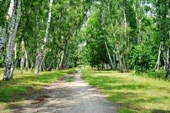 Natureza de Ucrânia Myrhorod Fotos de Stock Royalty Free