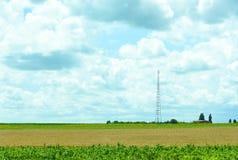 Natureza de Ucrânia A paisagem de campos agrícolas ucranianos do verão coloca A exploração agrícola Campos com milho, trigo fotos de stock royalty free