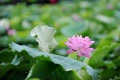 Natureza de Vietname Imagem de Stock Royalty Free
