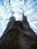 Natureza despida Fotografia de Stock Royalty Free