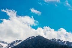 Natureza do abeto e céu azul em Almaty, Cazaquistão Fotografia de Stock