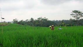 Natureza do Balinese filme
