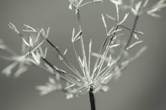 Natureza do close-up Fotografia de Stock Royalty Free