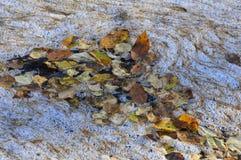 Natureza do fundo das folhas de outono caídas do vidoeiro na superfície da água da espuma Imagem de Stock