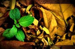 Natureza do fundo do projeto Imagem de Stock Royalty Free