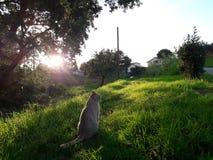 Natureza do gato Imagem de Stock Royalty Free